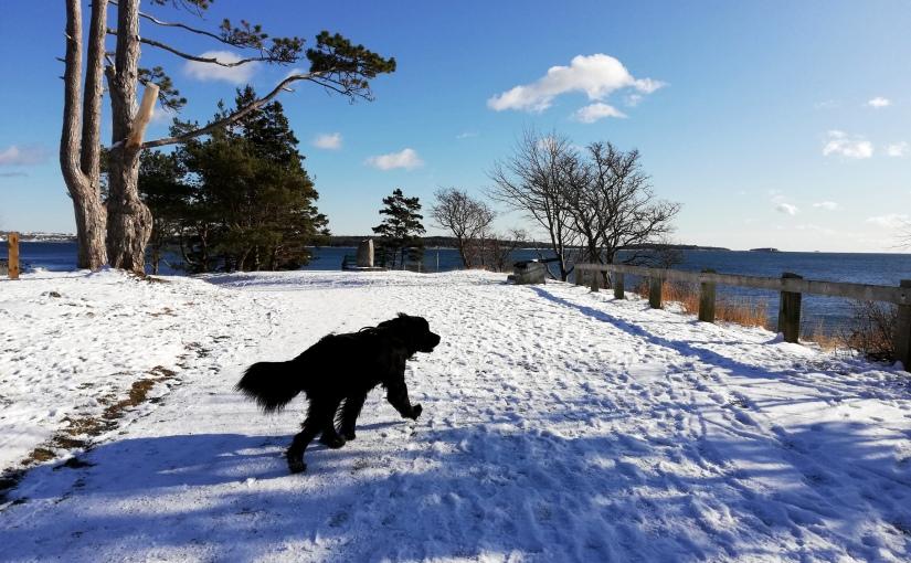 Winter in Halifax, Kopfzerbrechen, Weihnachten undNeujahr