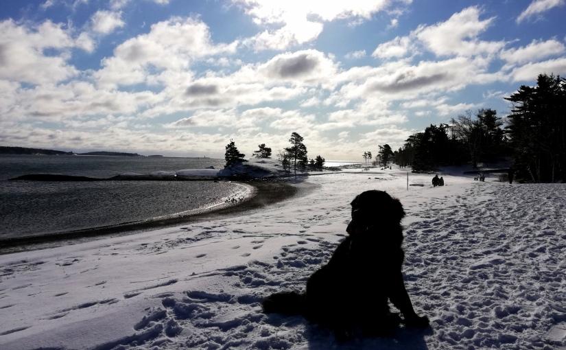 Winter Teil 2 und Beginn vonCorona